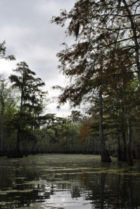 Honey Island Swamp - photo.jpg